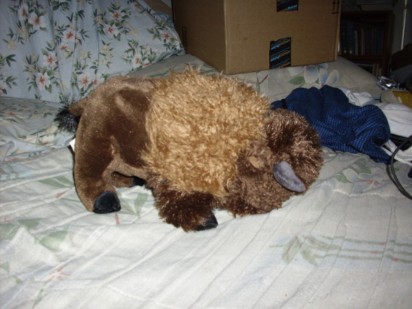 Bison stuffy