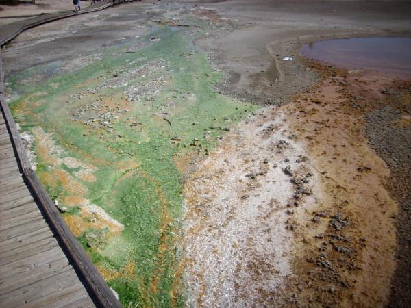 Green sulfur bacteria