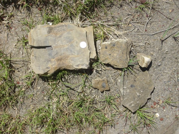 Pierre Shale fossils